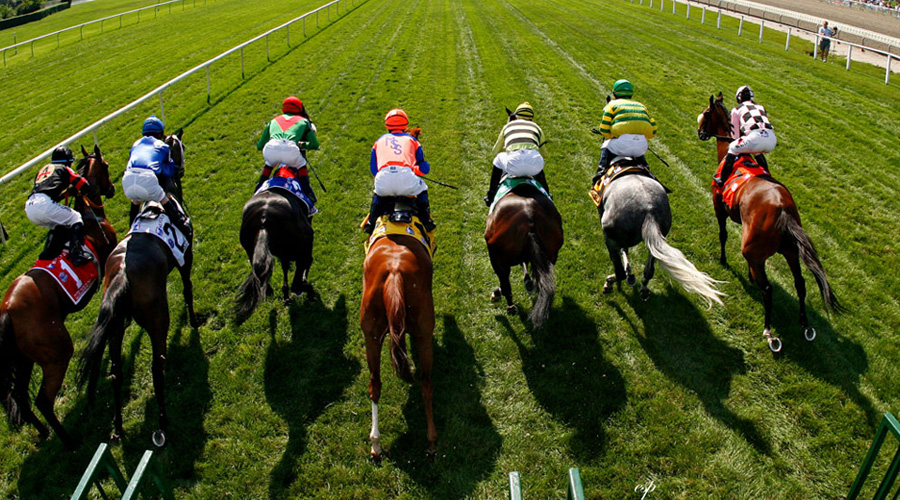 A beginner's guide to picking a winning horse at the Melbourne Cup