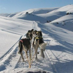 A day of dog sledding