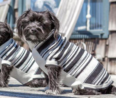 Canine Cashmere