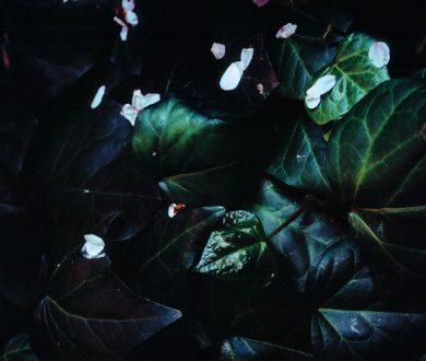 Exhibition: Tokyo Bloom