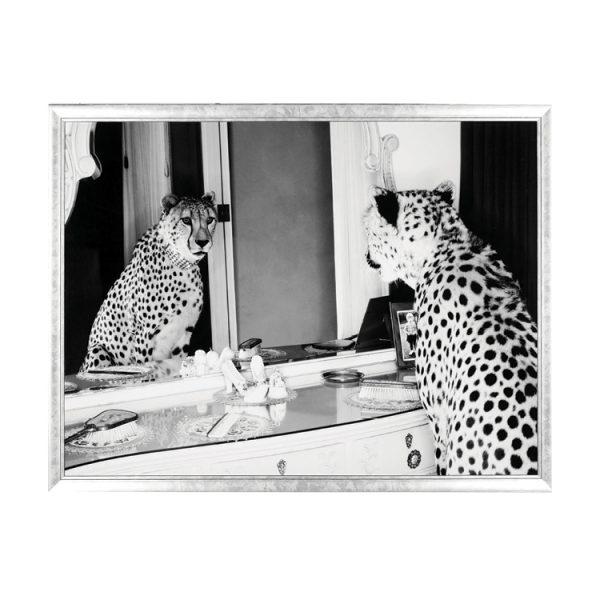 Cheetah Looking In Mirror Print
