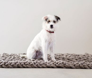 7 products to pamper your pet with in the lead up to winter