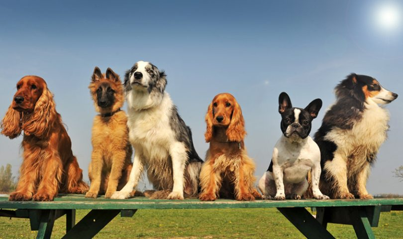 Dog Park Etiquette: The dos and don'ts of puppy play