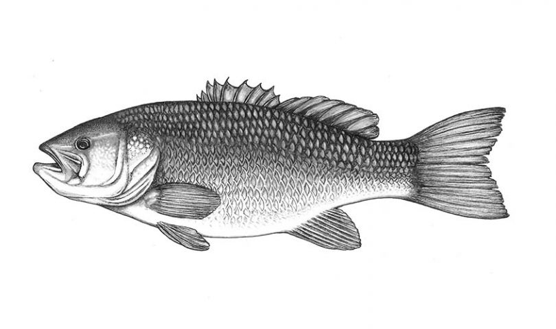 How to fillet a fish — your simple four-step guide