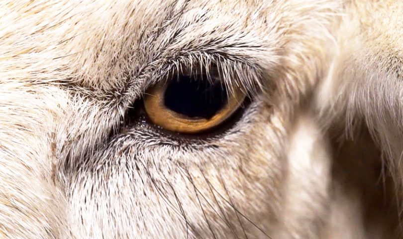 3 documentaries that are set to educate you on the current state of animal welfare