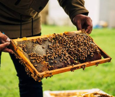 We're one step closer to saving the bees thanks to this innovative hive business