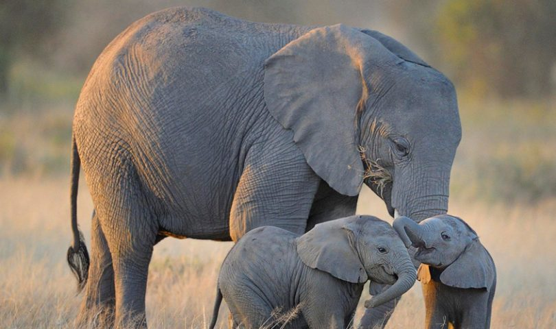 Life-Changing journeys: Help endangered wildlife at this incredible conservation in Zimbabwe