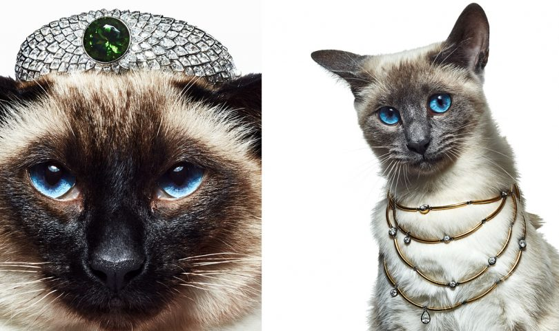 These fine felines show off the jewels that belong at the top of your wishlist