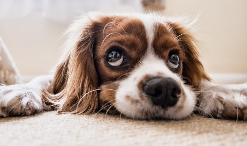 How to prepare your pets for separation anxiety