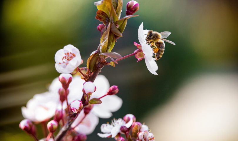 5 things you can do to help the local bee population this Bee Aware Month and beyond