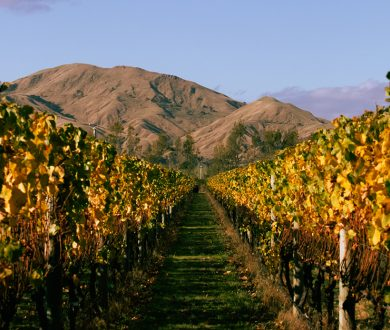 Get to know the story behind Butterworth Estate, the Martinborough vineyard fusing tradition and innovation