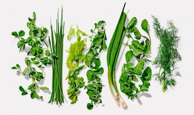 Green Shoots is the new garden kit making it easy to kick-start your vege patch