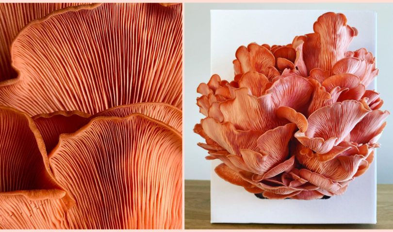 Grow your own mushroom masterpieces with these locally-made at-home kits